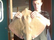 Small Eyed Ray fishing in the Bristol Channel