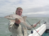 Starry Smoothhound fishing in the Bristol Channel